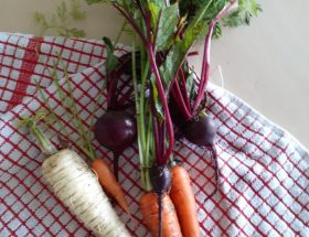 School Garden Fresh Carrots and Parsnips